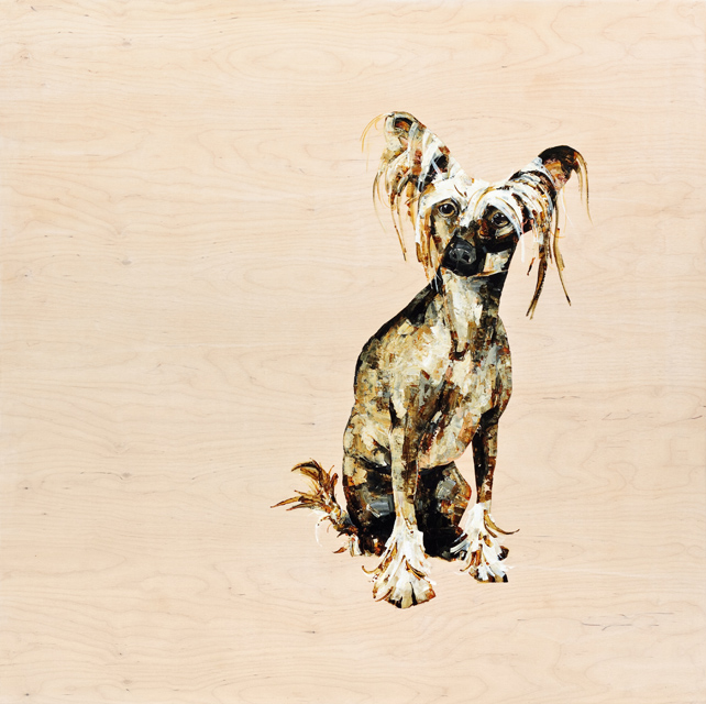 Chinese Crested - 48x48