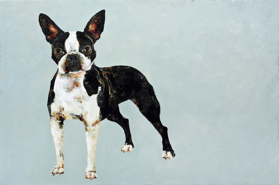 Boston Terrier - 24x36